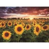 Anatolian - Field of Sunflowers Puzzle 1000pc